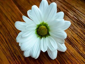 A Beautiful Flower Free JPG