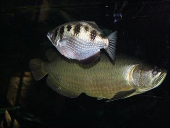 Aquarium Fish Free JPG