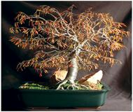 Autumn Bonsai Tree Sculpture