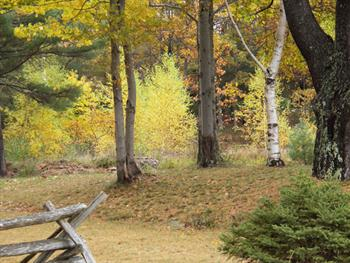 Autumn Trees Free JPG