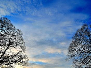 Background Of Sky And Trees Free JPG