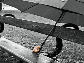 Bear And Umbrella
