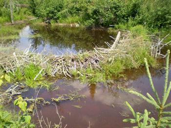 Beaver Dam Free JPG