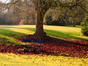 Bench Under A Tree Free JPG