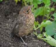 Bird Posing In Garden