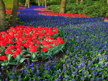 Blue And Red Flower Bed Free JPG