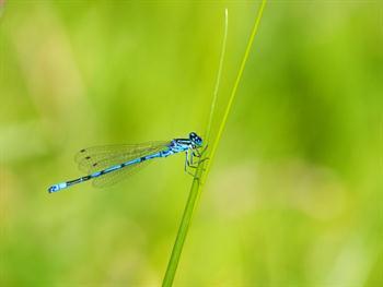 Blue Dragonfly Close-up Free JPG