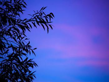 Blue Leaf Silhouette Free JPG