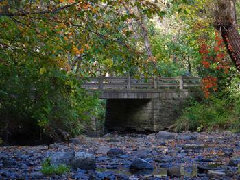 Bridge In The Woods Free JPG