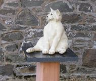 Caesar The Town Cat