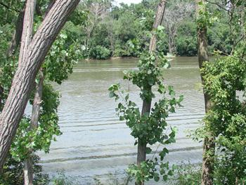 Canal Through The Trees Free JPG
