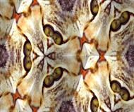 Cat Kaleidoscope