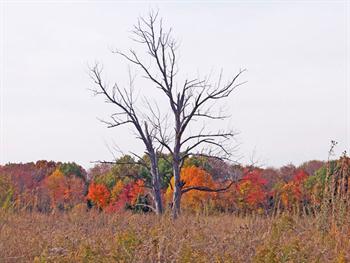 Dead Trees In Autumn Field Free JPG