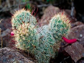 Desert Cactus Free JPG