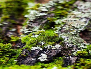 Detail Of Moss Free JPG