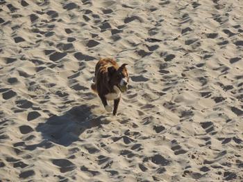Dog On Beach Free JPG