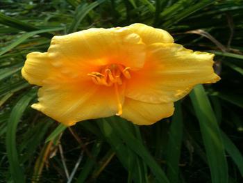 Drooping Flower Free JPG