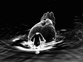 Duck Duck Free JPG