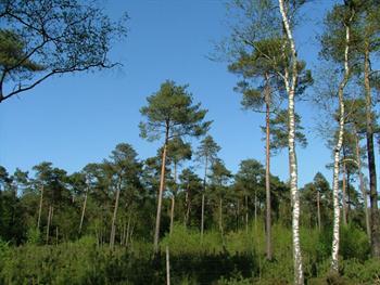 Dutch Forest Free JPG