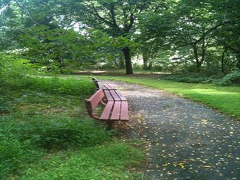 Empty Bench Free JPG