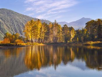 Enchanted Forest In Autumn Free JPG