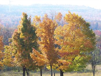 Fall Trees Mountain Behind Free JPG