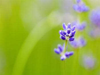 Flower And Shallow Depth Of Field Free JPG