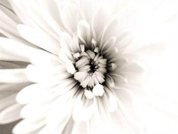 Flower – Light Effect Free JPG