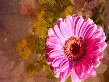 Flower On Floral Background Free JPG
