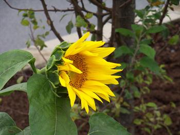 Flower Power Free JPG