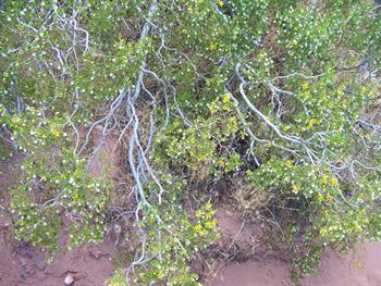 Flowering Bush Free JPG