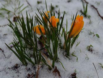 Flowers And Snow Free JPG