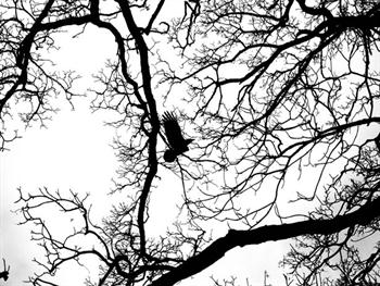 Flying Bird In The Branches Free JPG