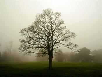 Fog Free JPG