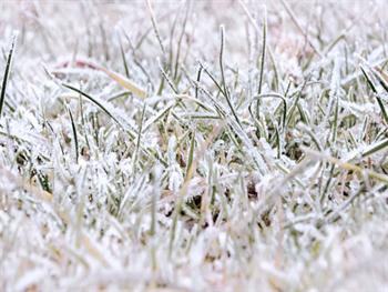 Frozen Grass Free JPG