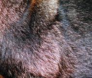 German Shepherd Fur 1