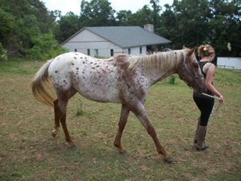Girl Leading Horse Free JPG