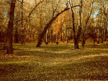 Glade In The Woods Free JPG