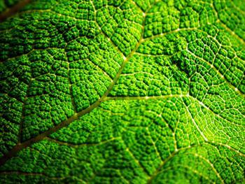 Green Leaf Free JPG