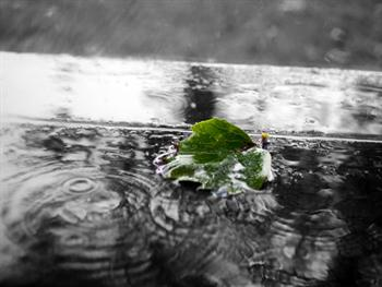 Green Leaf In The Rain Free JPG