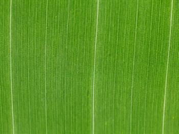 Green Leaf Pattern Free JPG