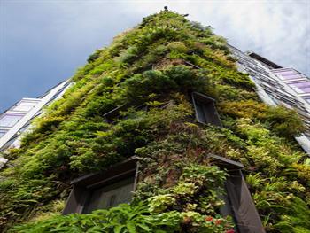 Green Living Wall Free JPG