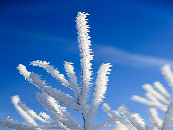 Hoar Frost On Branches Free JPG