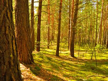 In The Forest Free JPG