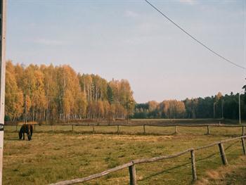 Janowskie Woods, Gwizdow Free JPG