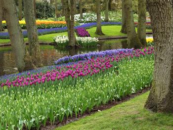 Keukenhof Flower Garden Free JPG