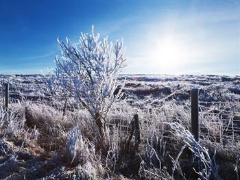 Landscape With Hoar Frost Free JPG
