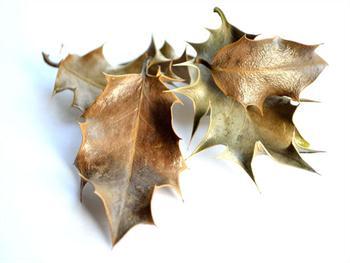 Leaves – Background Free JPG