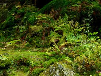Moss On Forest Floor Free JPG