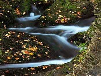 Mountain Stream In Autumn Free JPG